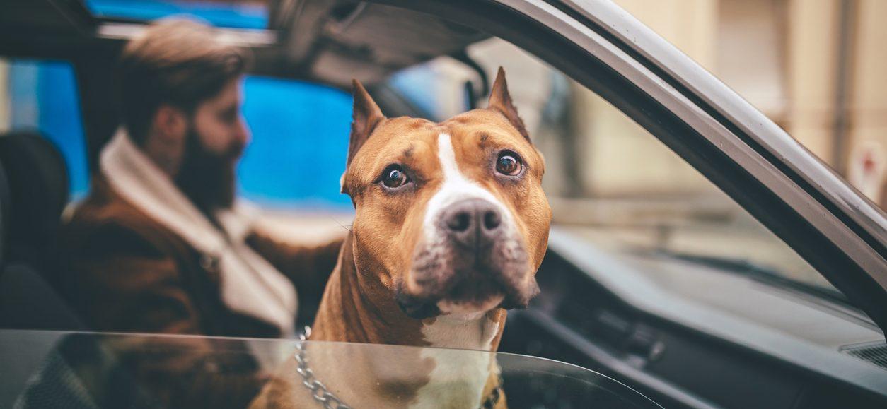 Canes potencialmente peligrosos